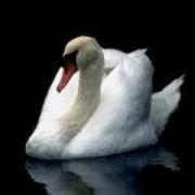 Лебедь Белая on My World.