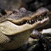 Андрей Мещерский on My World.